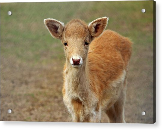 Acrylic Print featuring the photograph Young And Sweet by Cynthia Guinn