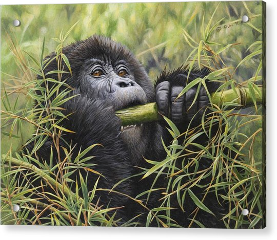 Acrylic Print featuring the painting Young Mountain Gorilla by Alan M Hunt