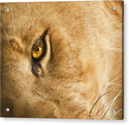 Acrylic Print featuring the photograph Your Lion Eye by Carolyn Marshall