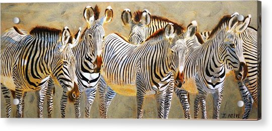 Zebra Herd Acrylic Print