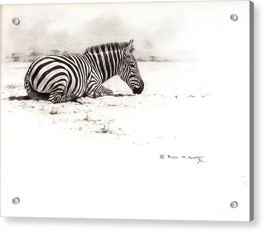 Acrylic Print featuring the painting Zebra Sketch by Alan M Hunt