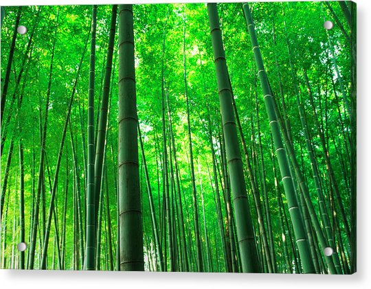 Bamboo Trees Photograph By Ooyoo