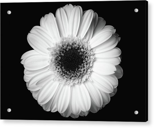 Acrylic Print featuring the photograph Black And White Flower by Mirko Chessari