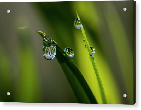 Rain Drops On Grass Acrylic Print