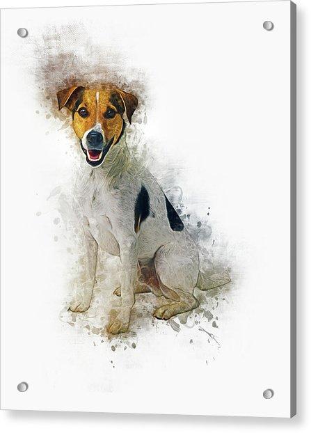 Jack Russell Acrylic Print