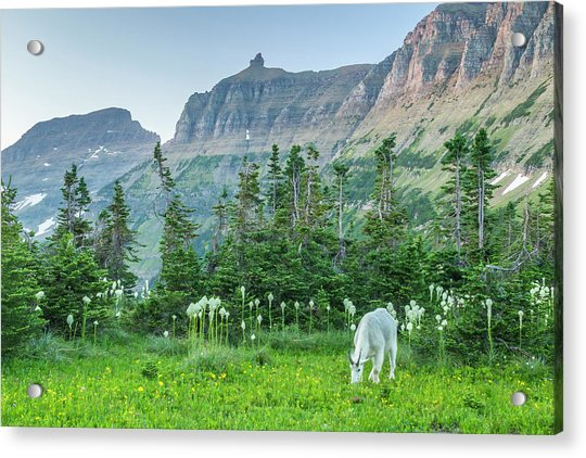 Usa, Montana, Glacier National Park Acrylic Print by Jaynes Gallery