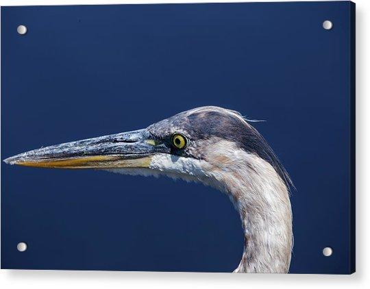 A Blue Portrait Acrylic Print