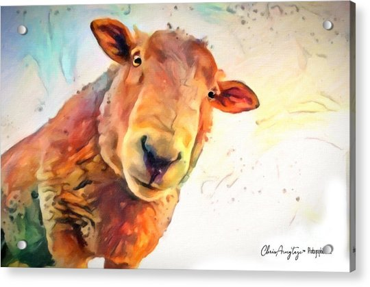 A Curious Sheep Called Shawn Acrylic Print