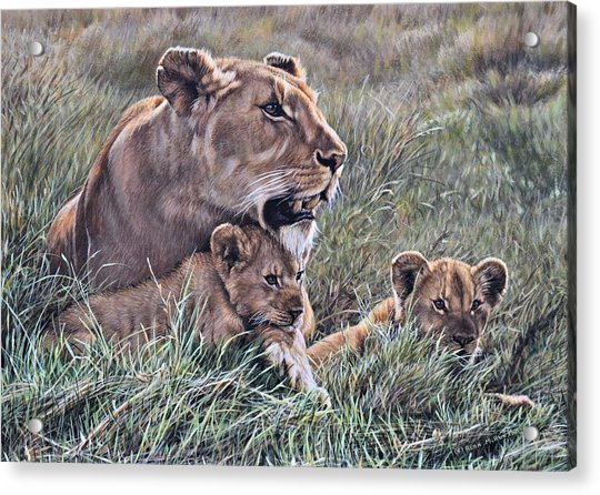 Acrylic Print featuring the painting A Quiet Moment Lioness And Lion Cubs by Alan M Hunt