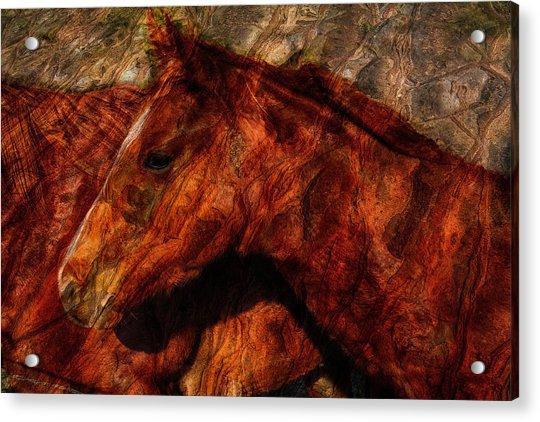 Abstract Horse Photograph Acrylic Print by Fernando Margolles