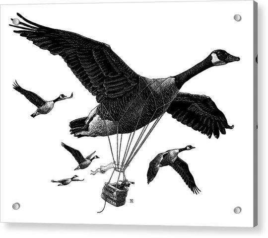Aero Canada - Bw Acrylic Print