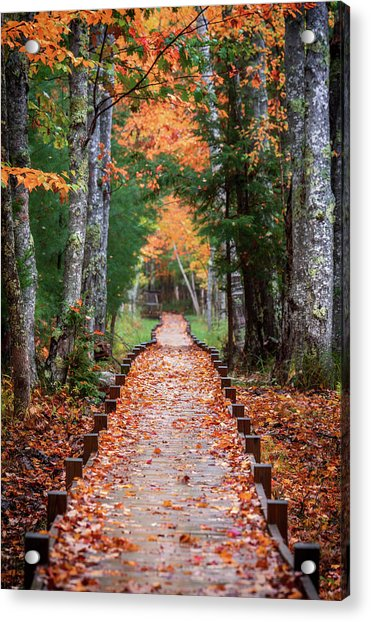 Autumn At Jesup Path Acrylic Print