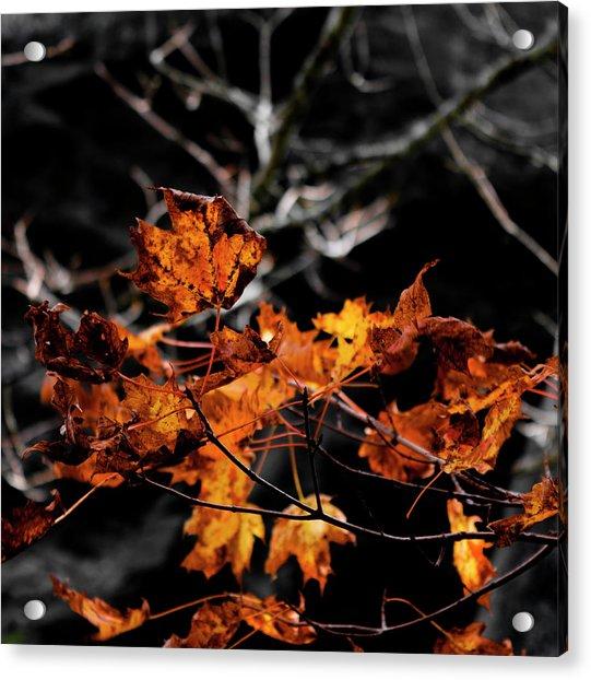 Autumn Brown Acrylic Print by Christine Buckley