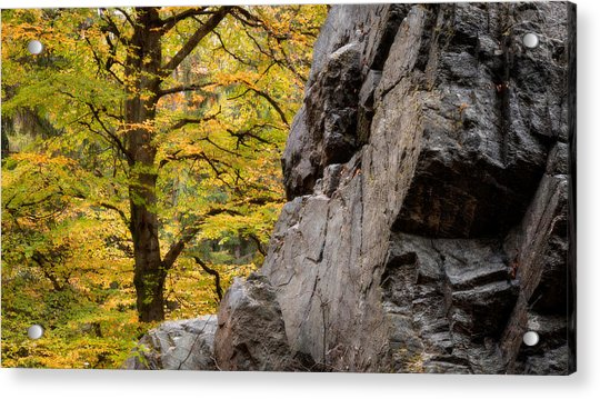 Rock 'n' Tree Acrylic Print by Dalibor Hanzal