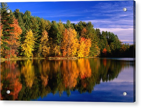 Autumn Trees In New Hampshire,new Acrylic Print