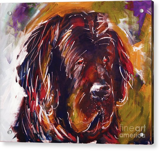 Beautiful Dog Painting  Acrylic Print