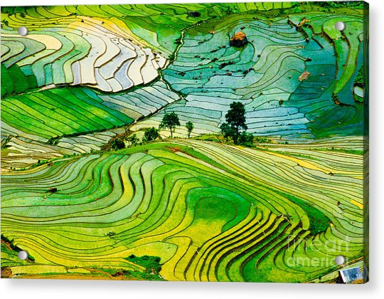 Beautiful Landscape About Terraced Rice Acrylic Print