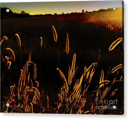 Beauty In Weeds Acrylic Print
