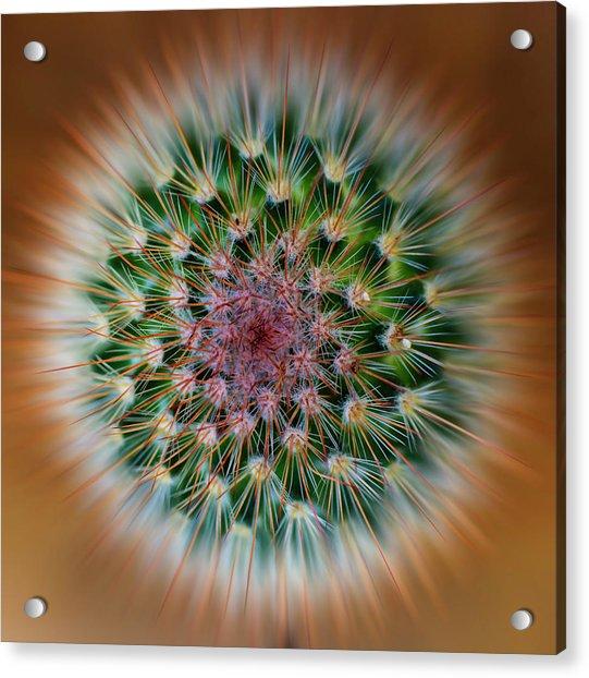 Cactus Cooler Acrylic Print