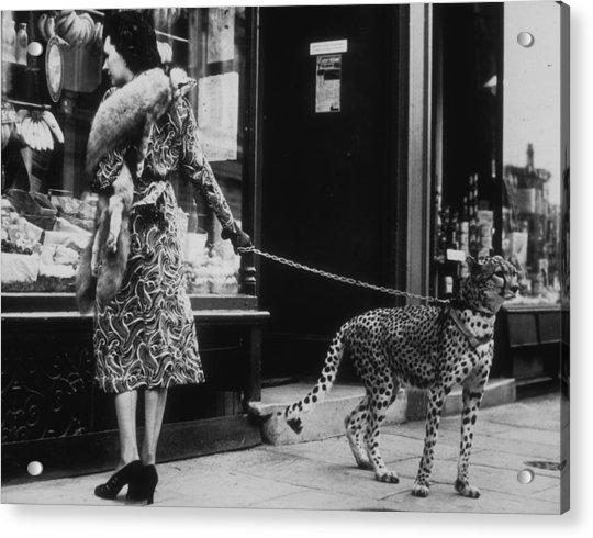 Cheetah Who Shops Acrylic Print