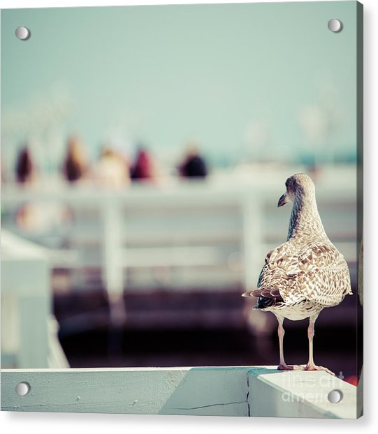 Close-up Of A Seagull In Sopot Pier Acrylic Print