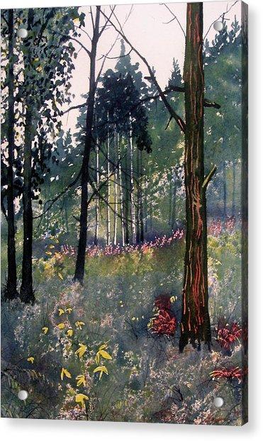 Codbeck Forest Acrylic Print