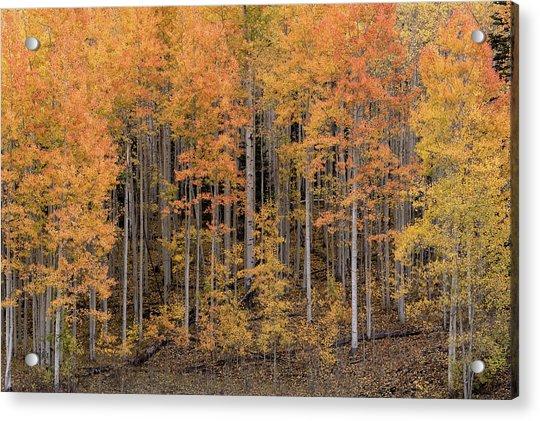 Colorado Guardians Acrylic Print