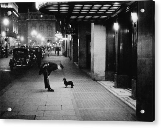Commissionaires Dog Acrylic Print by Kurt Hutton