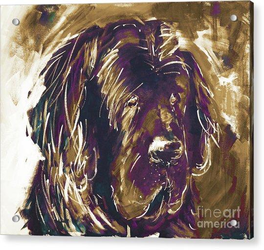 Dog Art  Acrylic Print