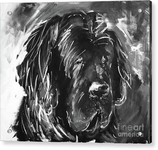 Dog Black And White  Acrylic Print