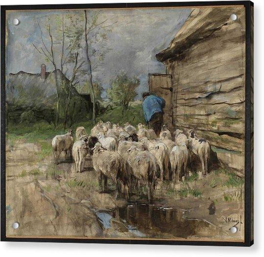 Entering The Fold Circa 1885-8 By Anton Mauve 1838-1888 Acrylic Print