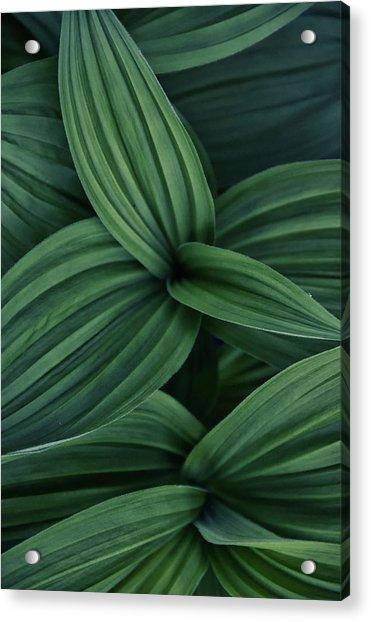 False Hellebore Plant Abstract Acrylic Print