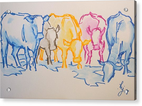 Five Cows Five Colors Watercolor Line Drawing Acrylic Print