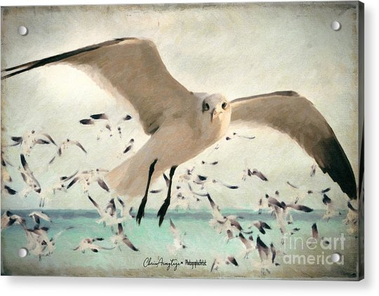Flight Of The Gulls Acrylic Print