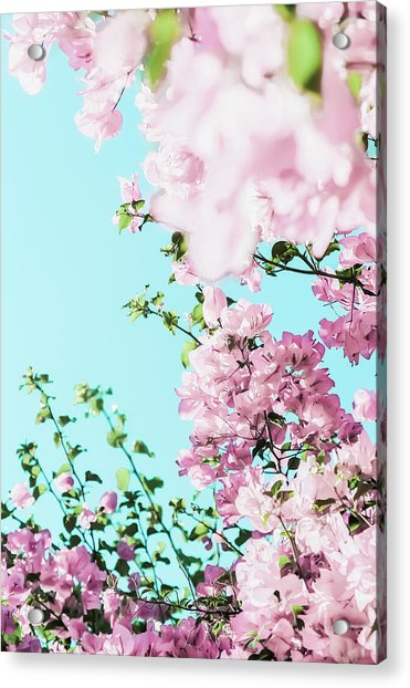 Floral Dreams I Acrylic Print