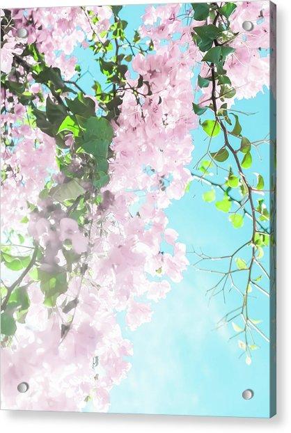 Floral Dreams IIi Acrylic Print