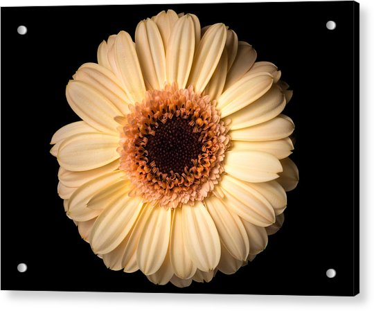 Acrylic Print featuring the photograph Flower Over Black by Mirko Chessari