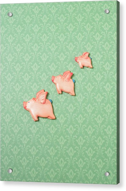 Flying Pig Ornaments On Wallpapered Acrylic Print by Peter Dazeley