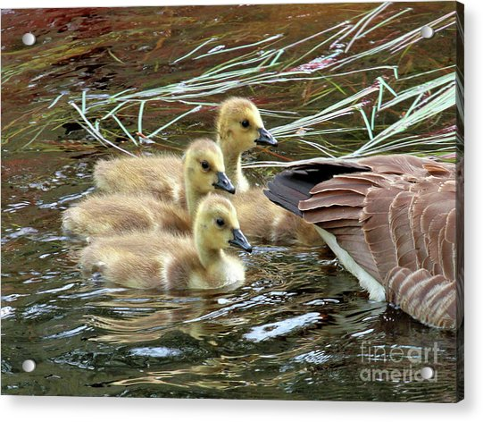 Following Mom's Lead Acrylic Print