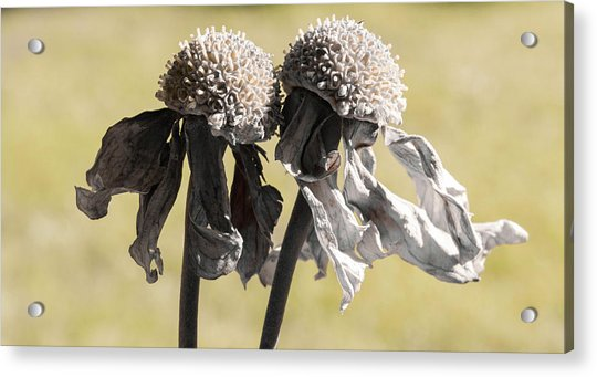 Ghost Sisters Acrylic Print