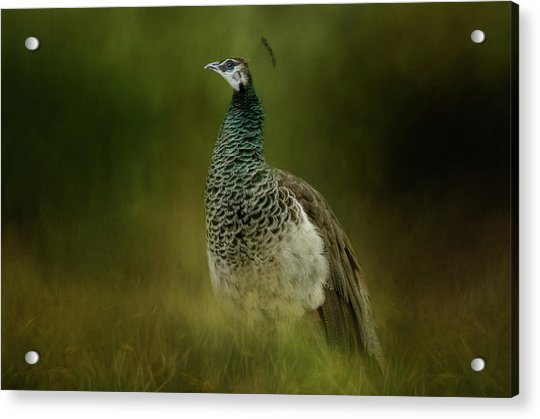 Green Gem In The Meadow  Acrylic Print