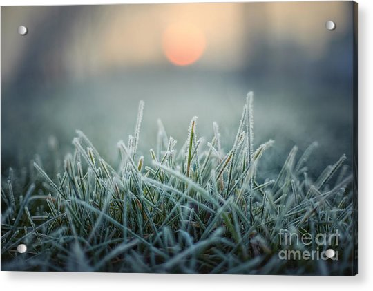 Green Grass With Morning Frost And Red Acrylic Print by Chromakey