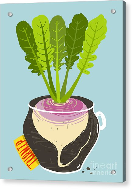 Growing Turnip With Green Leafy Top In Acrylic Print