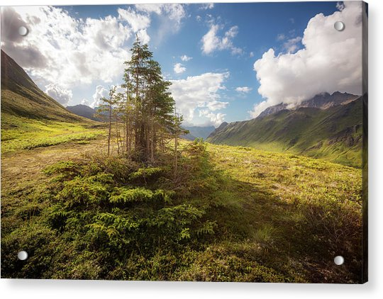 Acrylic Print featuring the photograph Haiku Forest by Tim Newton