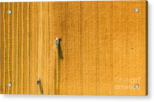 Harvester Machine Working In Field Acrylic Print
