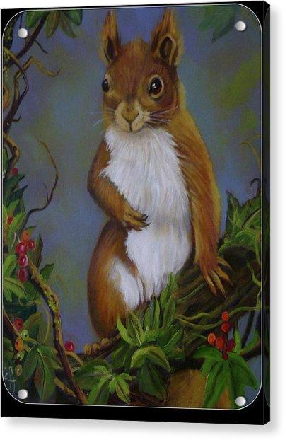 Highland Squirrel Acrylic Print by Janet Silkoff