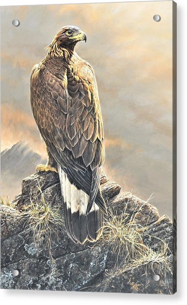 Acrylic Print featuring the painting Highlander - Golden Eagle by Alan M Hunt