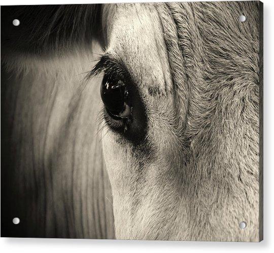 Horse Eye by Karena Goldfinch