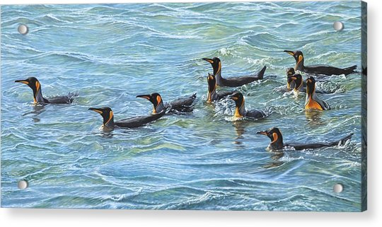 Acrylic Print featuring the painting King Penguins Swimming by Alan M Hunt