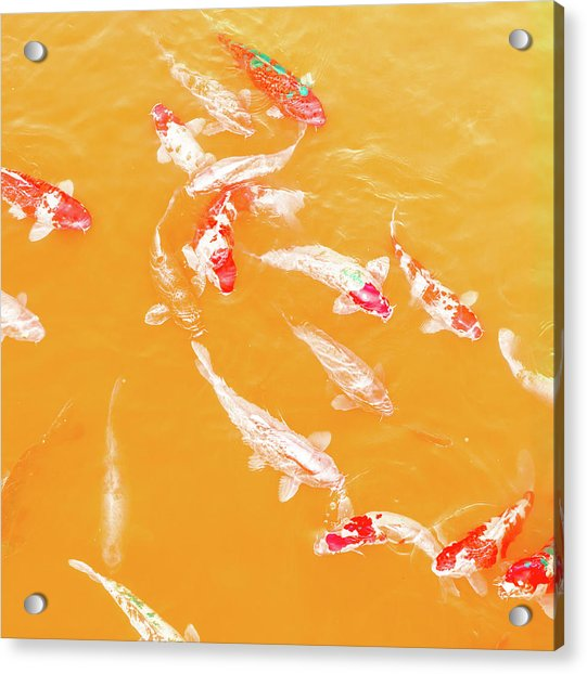 Koicarpscape 5 Acrylic Print